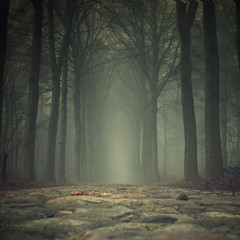 He said; come wander with me... (sole) Tags: road lighting morning blue trees light mist holland art nature dutch mystery forest dark landscape ilovenature photography photo bomen woods europe flickr foto fotografie surreal mysterious gonzalez bos carmen drenthe hollland mistymorning mistyroad sole carmengonzalez digitalcameraclub idream naturepoetry treesinmist 100commentgroup