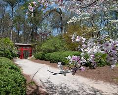 Japanese Garden (dswann01) Tags: pink flower cherry botanical birmingham flora nikon d80 tokina1116