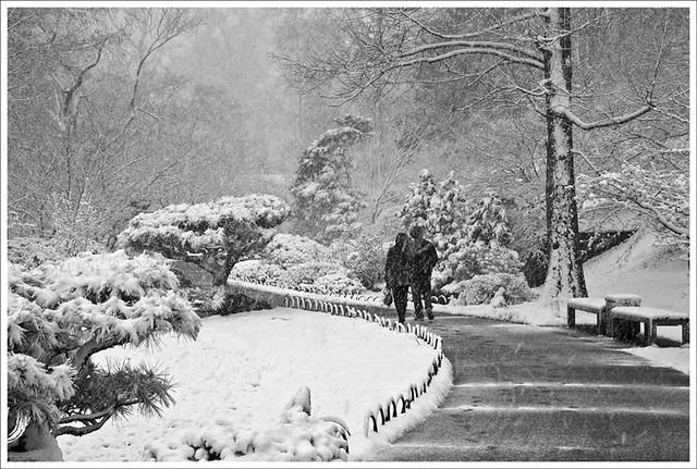 Missouri Botannical Garden 2011-03-26 4