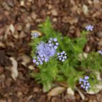 Wildflower_Center_105 thumbnail