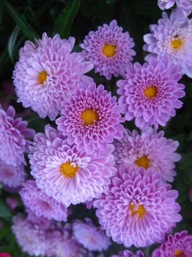 Rivett Flowers