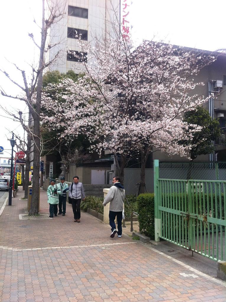 2011 桜 磯上