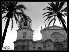 Catedral de Cadiz (Alberto Jiménez Rey) Tags: church contraluz arboles sony catedral iglesia cybershot palmeras alberto cadiz rey contrapicado gades jimenez bwartaward dsct200 albjr albjr7
