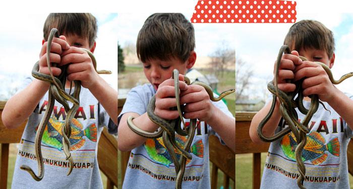 snake season again
