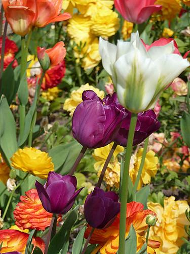 parterre de fleurs.jpg