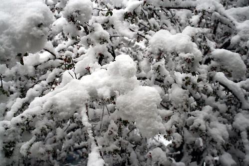crabapple_snow2