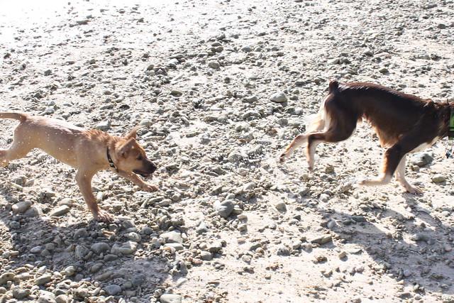 Gretel chases Ansel