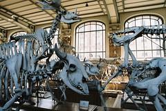 Galerie de Paléontologie (kygp) Tags: paris france colour analog skeleton photography jardin des musee bones avril plantes squelette 2011 paleontologie