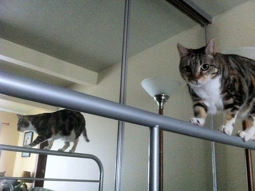 Spanky as a circus cat