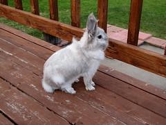 Bunny on alert