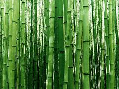 [フリー画像] 自然・風景, 森林, 竹・竹林・竹藪, グリーン, 201104170700