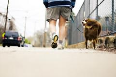 13/30 Addition (soupatraveler) Tags: street dog man feet philadelphia car socks fence walking major legs pavement hill canine sneakers sidewalk shorts leash aussie australianshepherd manayunk famiy picturespring iswearitjustcameoutitjusthappenedibentdownmajturnedisnapped iloveeverythingaboutthispicture whatsnottolovefencesshotfromthegroundinmyhoodwithlotsofbokehandslidintoperfectionforme