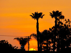 Walking home (OrangeCounty_Girl) Tags: sunshine palmtrees huntingtonbeach hnc orangecountygirl hollyclark hollyclark714 bighugesunset holly714