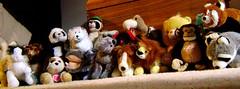 Fluff Buddies (Day 14) (Pattern of Ivy) Tags: old horse dog animals cat panda bears memories pride indoors plushies littlekids stuffedanimals 365 hobbies carebears childish