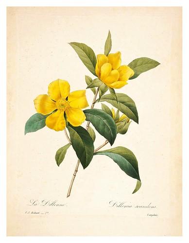 009-Viña serpiente-Choix des plus belles fleurs…1827- P.J.Redoute
