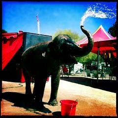 Pima Fair Elephant by Jason Willis