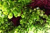 Au pied de mon arbre... (dadavidov) Tags: nature vert arbre printemps verdure feuille tronc branche touraine indreetloire tilleul endessous saintpierredescorps