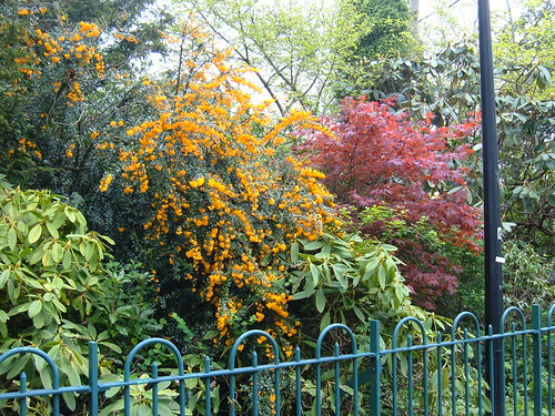Botanic Gardens, Belfast