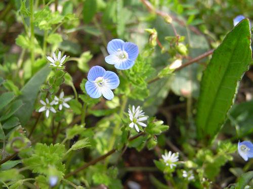 春の花々@明日香村-16