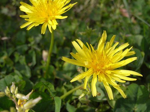 春の花々@明日香村-09