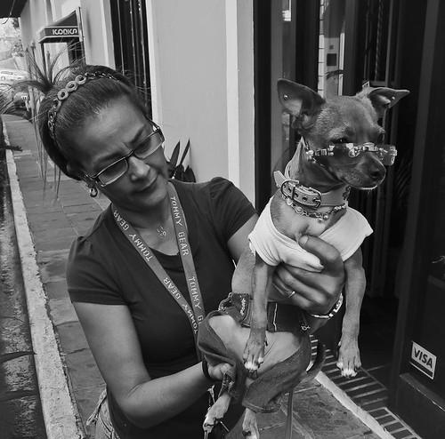 PERRO CON ESTILO!! ( DOG WITH STYLE!!)