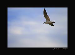 LIBRE (Almudena Raya) Tags: espaa lake water valencia canon lago spain agua aves pesca camara fotografo spagne laalbufera