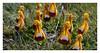 Flora of  National Park Torres del Paine (Las Torres Patagonia) Tags: patagonia flora torresdelpaine chileanpatagonia