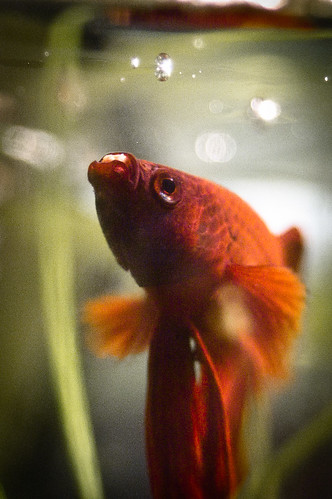 top 4 betta fish eating problems fish care