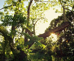 GOPR0087 (Schuyler Van Loon) Tags: california trees santacruz tree sunny fisheye lensflare seabright gopro oceanveiw