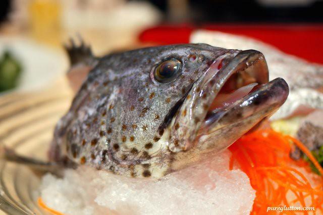 fish head1