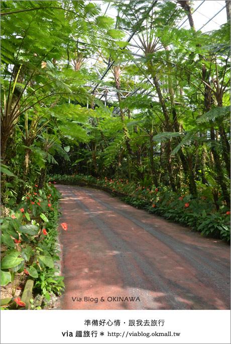 【via的沖繩旅誌】名護鳳梨公園~可愛又香甜的鳳梨樂園!12