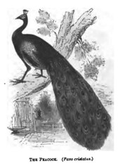 The Natural History of Selborne-1861  - 20