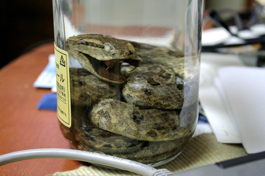 Snake wine(2)