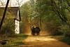 back in time (AlicePopkorn) Tags: light horses sun wagon landscape spring time rays dust timeless teutoburgerwald lippe ruralscene naturepoetry alicepopkorn absolutegoldenmasterpiece