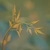 for Iris... (shantaya ~ dannie) Tags: light love home bravo soft nandina firstquality heavenlybamboo