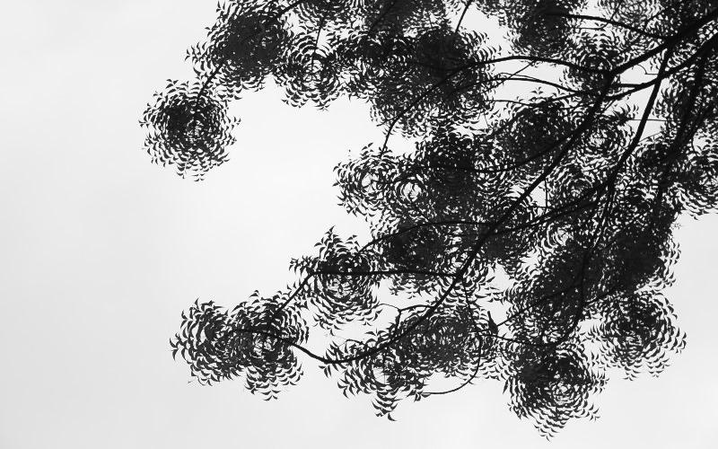 仰視像是水中漣漪的樹葉