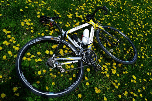Bike on dandelion