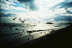 Feeding Frenzy, Clash of the 2 Scans: The Vault (Chornukopia) Tags: light sea sky seagulls film beach water birds silhouette clouds 35mm landscape lomo lca xpro lomography crossprocessed brighton waves hove seagull gulls toycamera lofi lomolca westpier analogue vignetting milf vignette manualfocus brightonandhove thevault lomofi lomographyfilm silhouettephotography manilovefilm aperture3 lomographyxprochrome10035mm