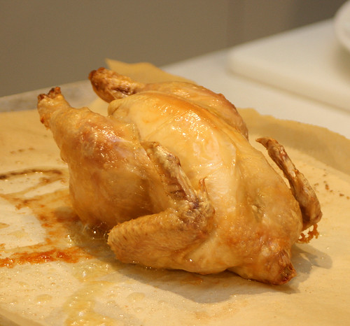 Baby poussin hot from the oven!