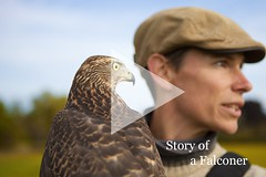 Story of a Falconer (play)