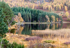 Autumn at Loch Pityoulish (Geoff France) Tags: autumn scotland lochs autumntints scottishlandscapes scotlandscountryside scotlandslandscapes landscapelovers