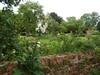 Hemingford Grey (Sunchild57 Photography. Taking a break.) Tags: hemingfordgrey manorhousegarden