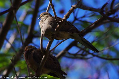 Birds-6072