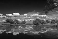 gespiegelt (~janne) Tags: white black reflection wasser himmel wolken spiegelung radtour oder janusz ziob