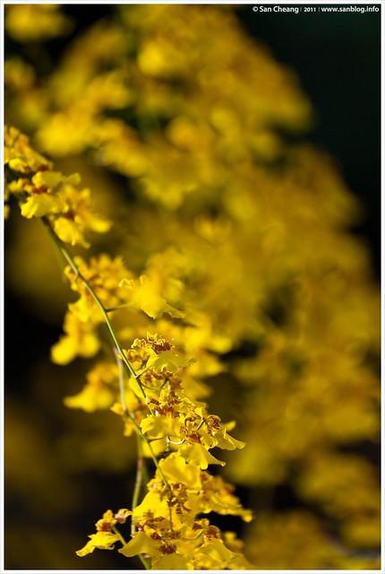 觀音堂蘭花