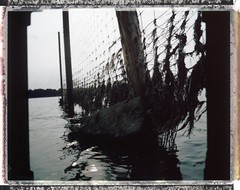 Waterfence (Coffinradio) Tags: wood plant color mamiya water stone fence polaroid wasser fuji silk zaun 90mm stein rb 67 kraut colorpolaroid sekorc fp100