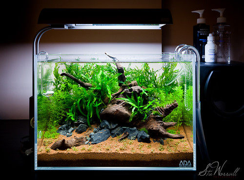 Flickriver: Stu Worrall Photographys photos tagged with aquascape