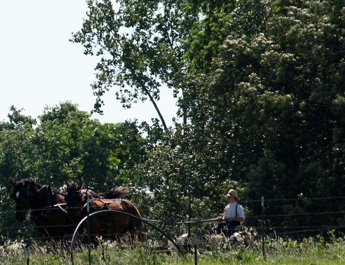 Amish Field Work 3