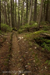 "Forest Trail • <a style=""font-size:0.8em;"" href=""http://www.flickr.com/photos/63501323@N07/5883775246/"" target=""_blank"">View on Flickr</a>"