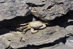 Unreachable. (Bea x.) Tags: sea summer beach mar rocks crab playa verano menorca rocas calor cangrejo